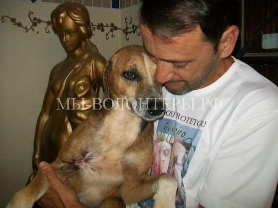 Спасение собаки с ранами и язвами15