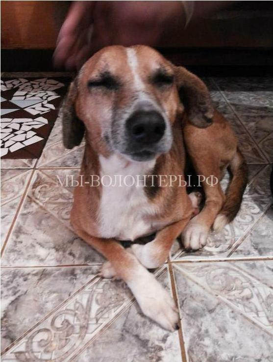 Спасение собаки с ранами и язвами16
