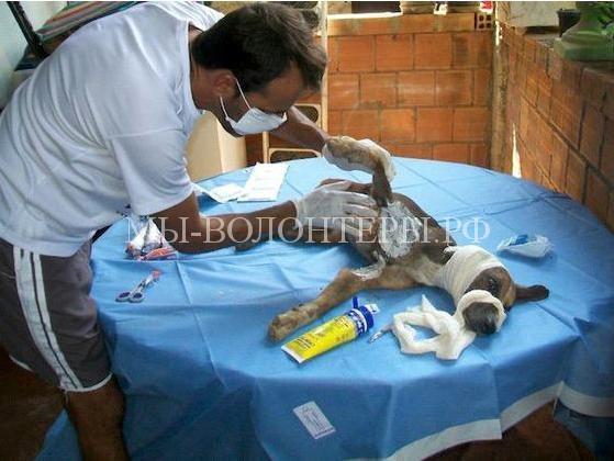 Спасение собаки с ранами и язвами5