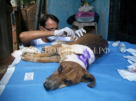 Спасение собаки с ранами и язвами8