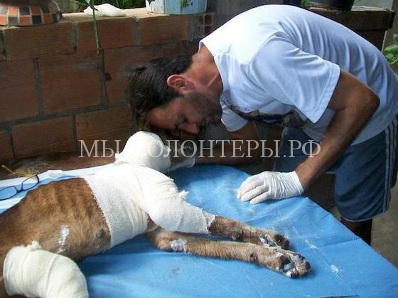 Спасение собаки с ранами и язвами9