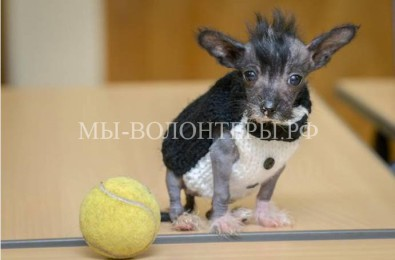 Крошечный щенок Артур спасен и очень хочет жить!