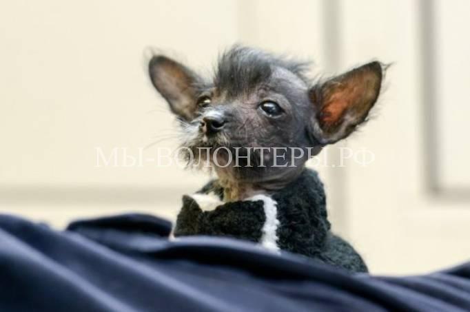 Спасение щенка выброшенного на улице6