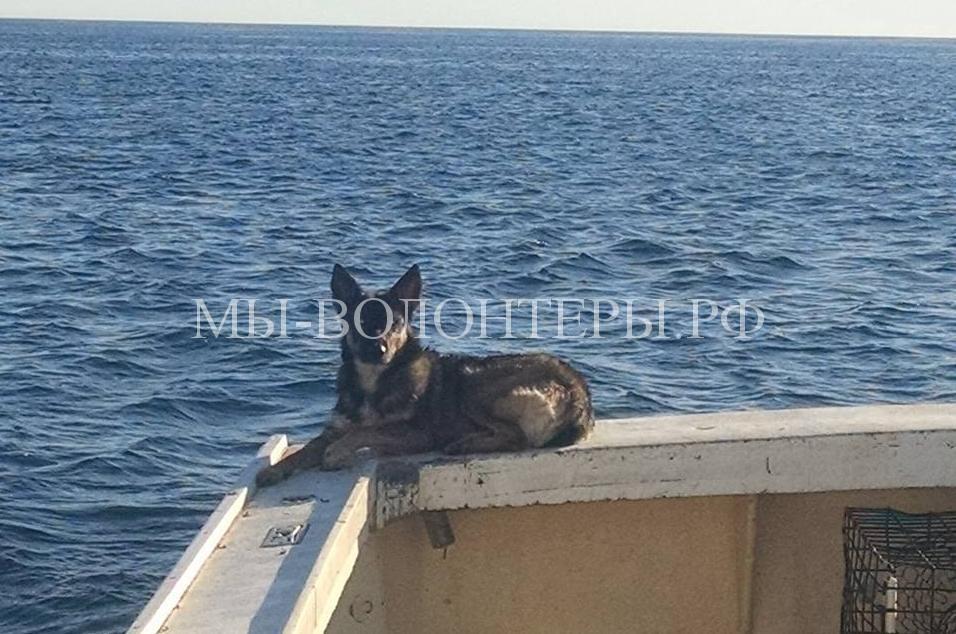 Щенка упавшего в океан нашли через месяц1