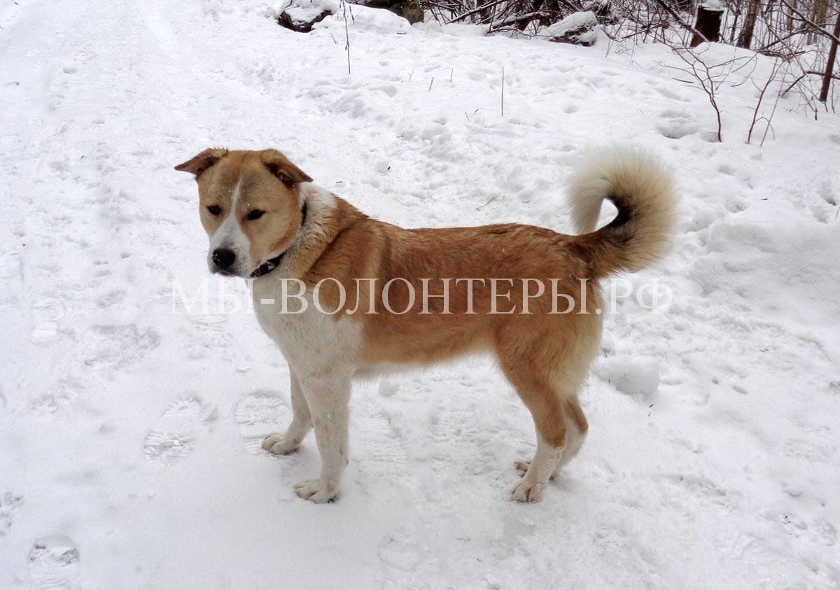 афина-приют-щербинка-чудная-собака