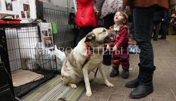 19-20 марта состоится выставка приютских собак и кошек