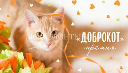2-3 апреля состоится выставка приютских кошек «Доброкот»