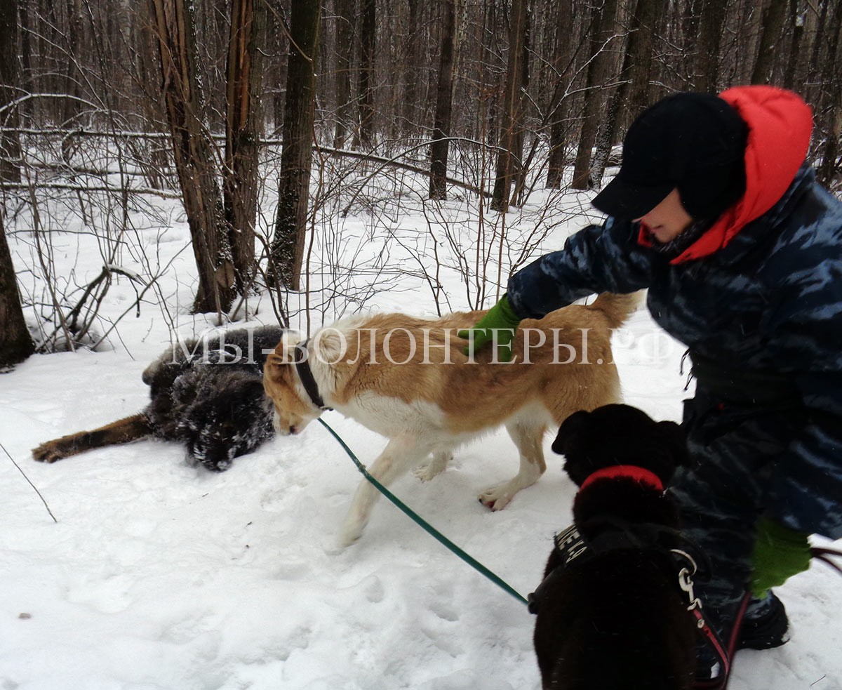 кавказец-буран-афина-мурзилыч-дружба-сложной-собаки