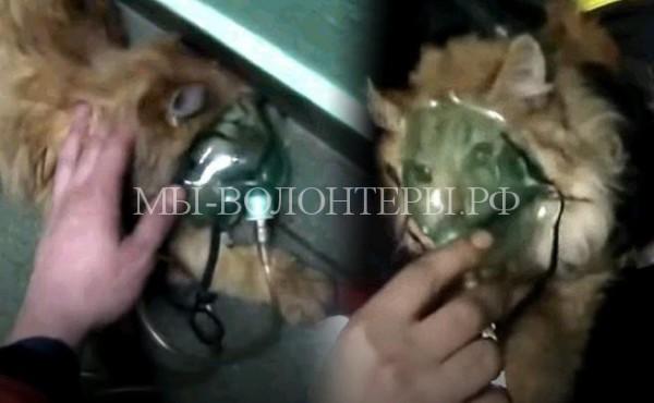 Пожарные при помощи кислородной маски спасли кошку от удушья
