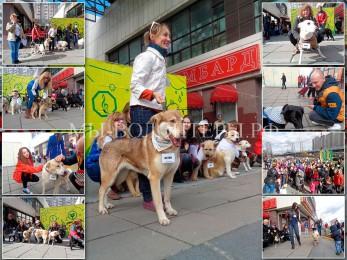 Собаки  и волонтеры приюта Щербинка — в Акции «Разбуди Район» (Ю. Бутово)