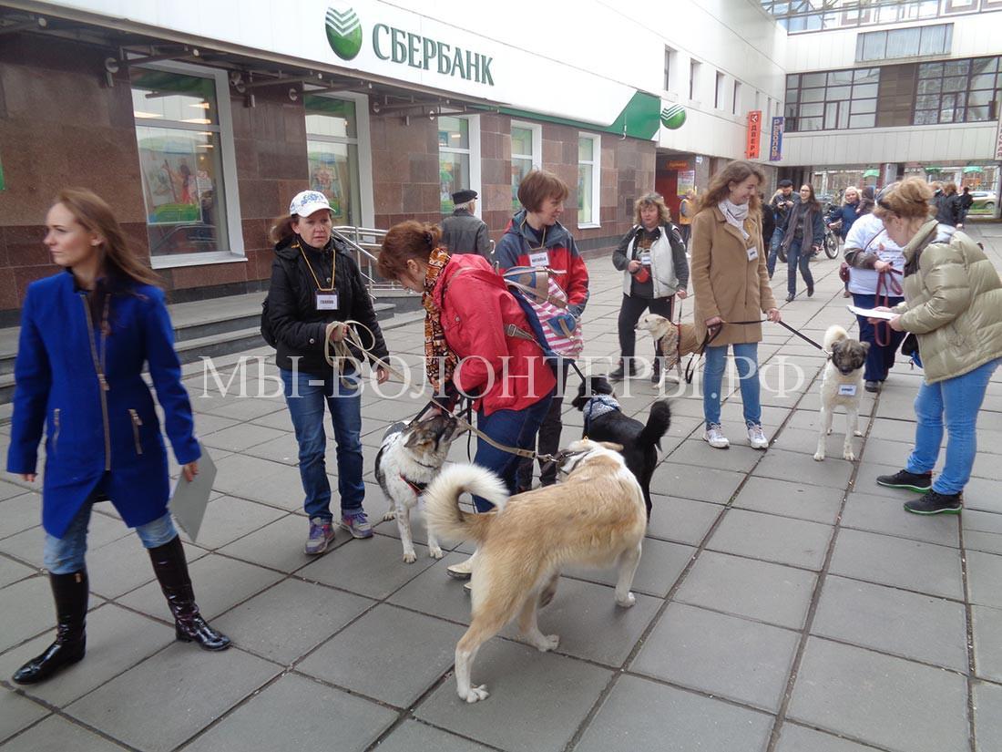 Арт-субботник-Бутово--ждем-начала-4