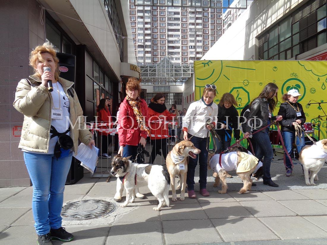 Арт-субботник-Бутово-приглашаются-собаки-щербинки-с-волонтерами