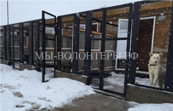В Ненецком автономном округе открылся приют для бездомных животных с современными вольерами