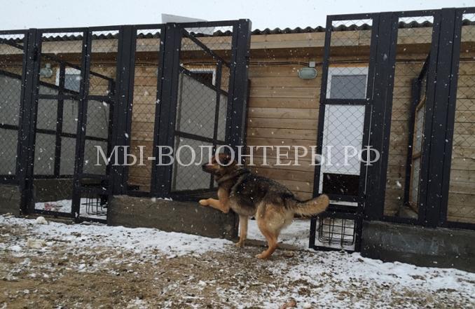 Открылся приют для бездомных животных за полярным кругом2