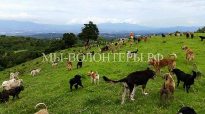 Приют для собак со свободным выгулом