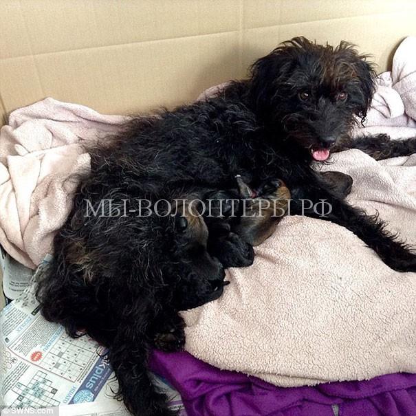 Собака спасла девушку и девушка забрала ее домой5