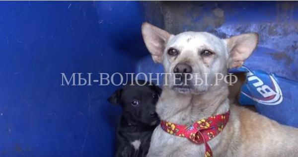 Спасение собаки и ее щенка из мусорного бака