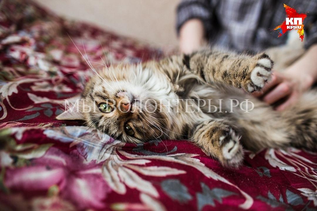 Школьница из Челябинска спасла кошку из вентиляционной шахты многоэтажки4