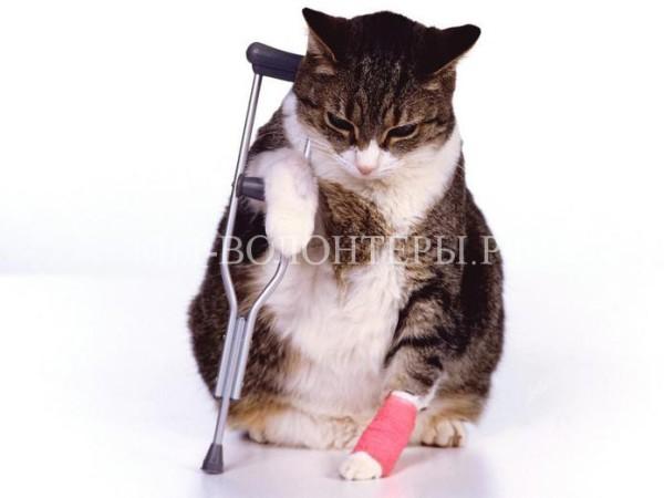 Осторожно! Весенний травматизм животных