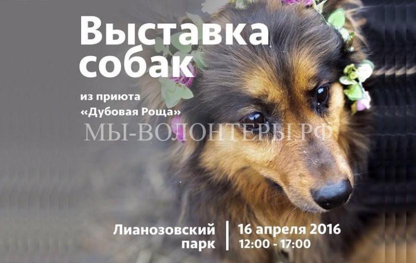Выставка приютских собак в Лианозовском парке