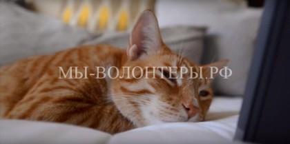 Музыканты и учёные сочинили колыбельную для кошки