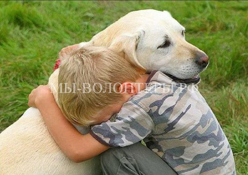 Эвтаназия — не для собак. Закон хабаровских депутатов об эвтаназии бездомных животных отменен