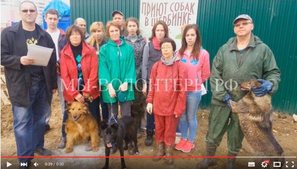 Мы, волонтеры приюта Щербинка, обратились к Путину В В.  — на Прямую Линию Президента РФ, 14 апреля 2016