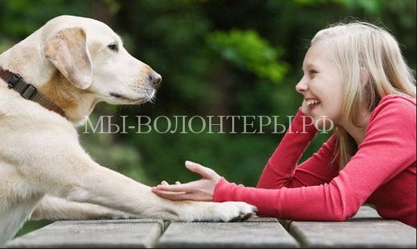 Переводчик с собачьего
