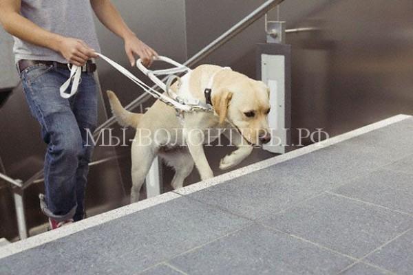 Поправки в правила перевозки собак в метрополитене