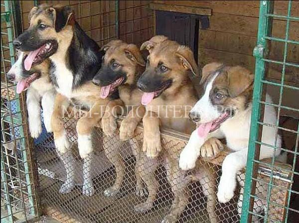 Госдума обратилась в Генпрокуратуру провести проверку приютов для животных после инцидента в Вешняках
