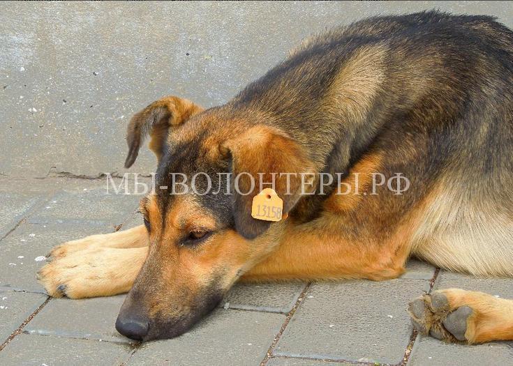 В Москве на стерилизованных бездомных собак стали вешать специальные бирки