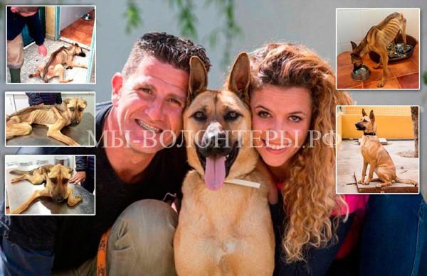 Удивительная история спасения собаки Барилла, Испания