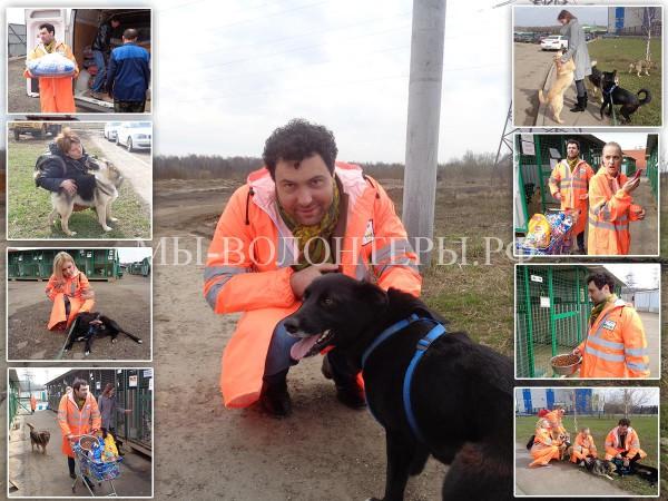 Финал Акции «Вагончик Добра» —  Евгений Кунгуров посетил приют Щербинка