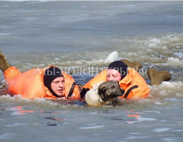 Спасатели пришли на помощь бегающей по льду собаке