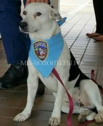Бездомный пес Джорджи пришел в полицию и нашел там и дом, и работу