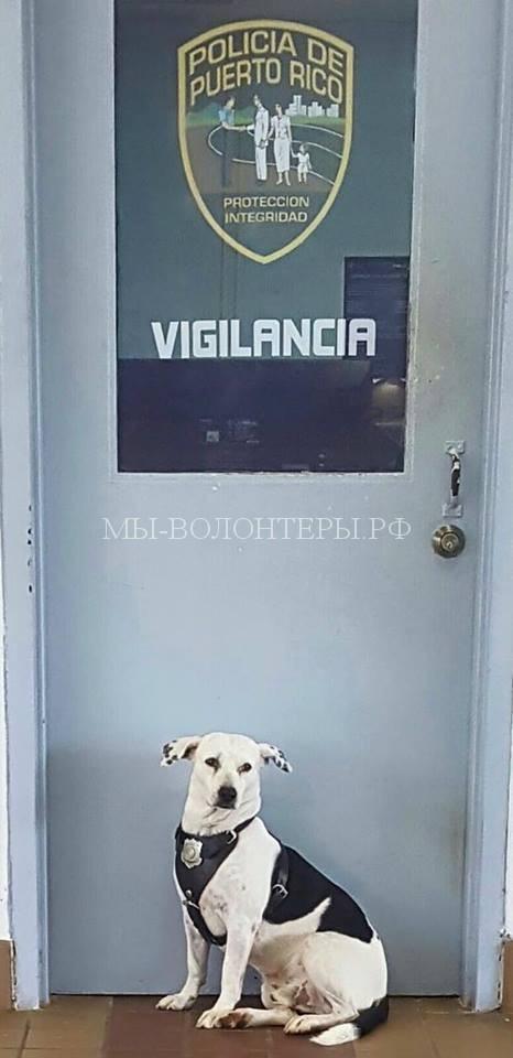 Бездомный пес нашел в полиции дом и работу5