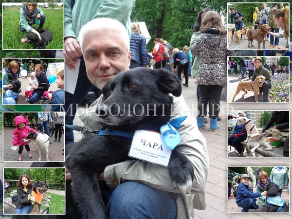 22 мая 2016, Ярмарка «Дорога к дому», наша Чара представила приют Щербинка