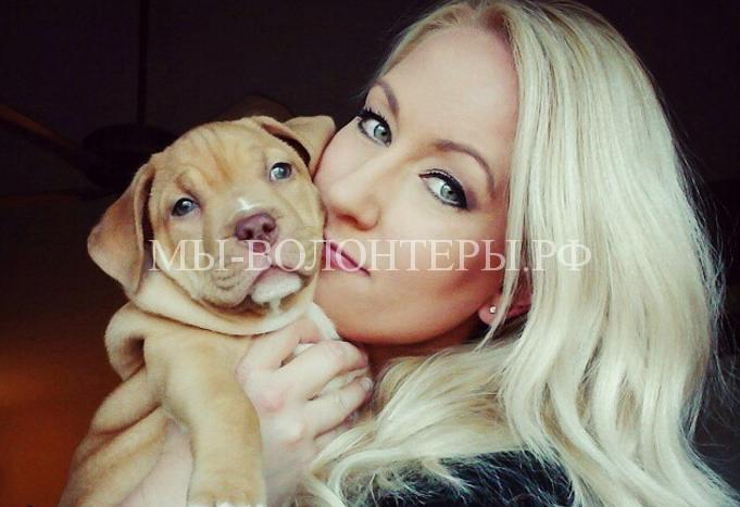 Женщина посвятила свою жизнб спасению собак7