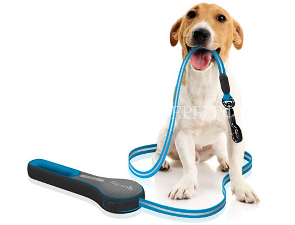 Как правильно выбирать поводок собаке