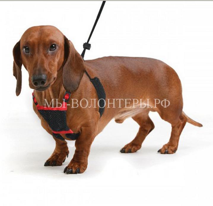 Как выбрать поводок для собаки8