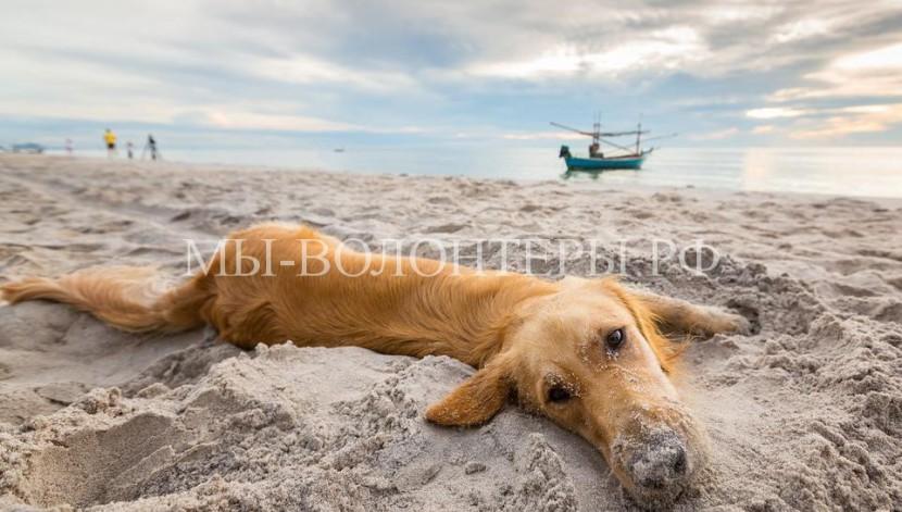 Массовое отравление собак в Евпатории