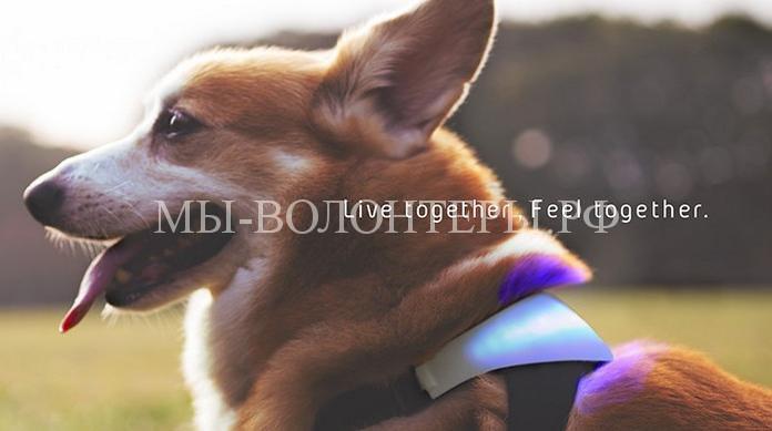 Ошейник-перводчик для собак2