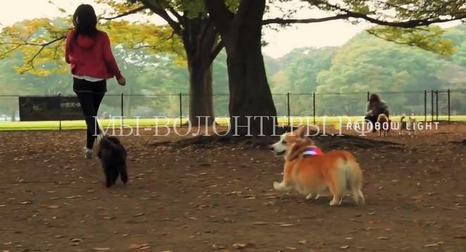 Ошейник-перводчик для собак5