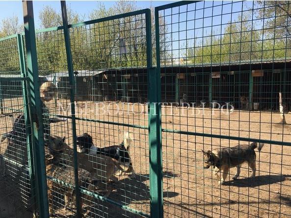В Москве завершилась проверка всех муниципальных приютов