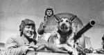 Собаки на фронтах Великой Отечественной. Дню Победы посвящается