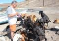 34 бездомных животных благодарны этим людям