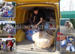 Помощь приюту Щербинка — от жителей Москвы и детей Южного Бутово