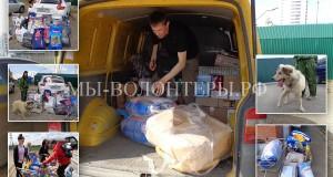 Помощь приюту Щербинка - от жителей Москвы и детей Южного Бутово