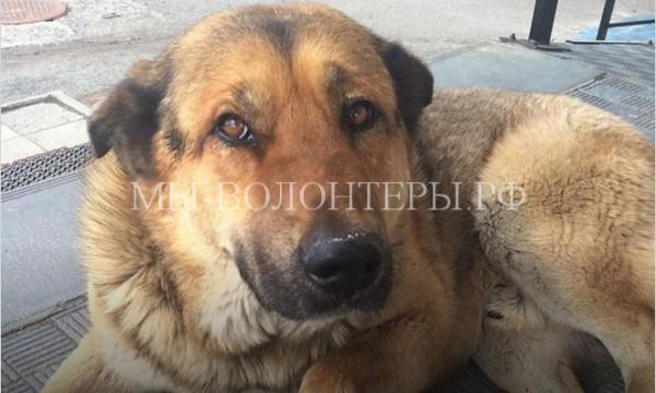 Камчатский Хатико, неделю проживший в аэропорту, обрел нового хозяина