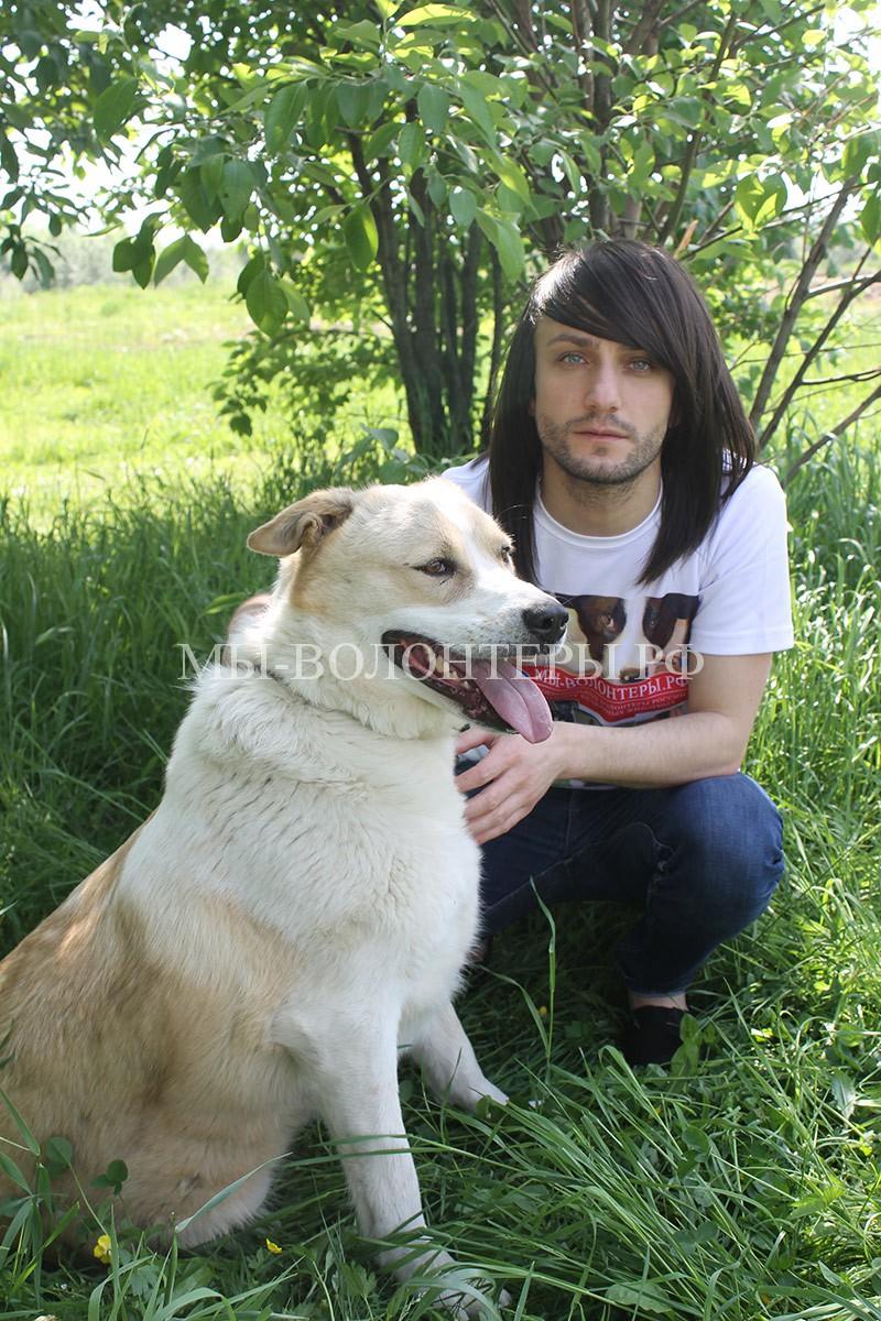 леван-тодуа-с-роскошной-собакой-афиной